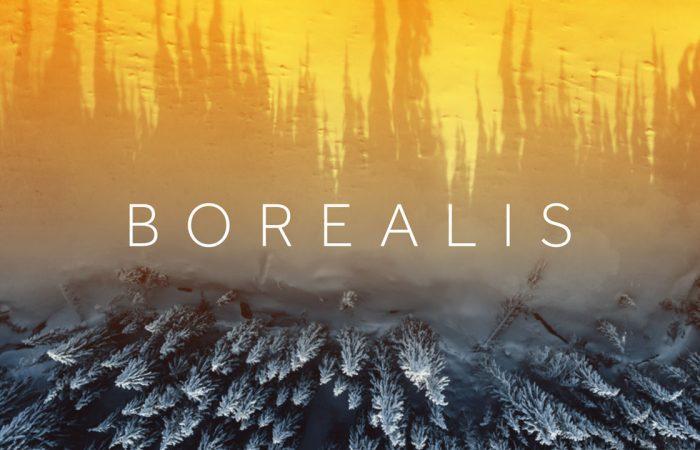 A landscape shot of the Borealis forest